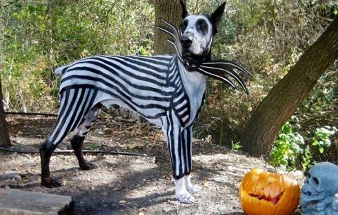 PetPaint宠物专用彩色涂鸦发胶