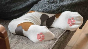 看我学猫走路Felissimo猫脚袜