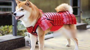 Samurai Age宠物武士盔甲