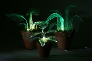 """可以照明的""""常青植物"""""""