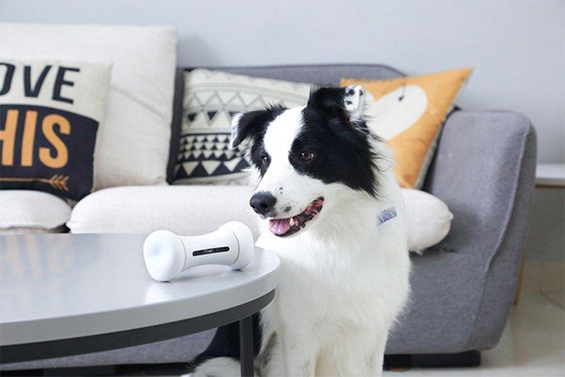 可以回应宠物狗情绪的智能玩具wickedbone